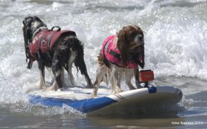 surfing-dog-event